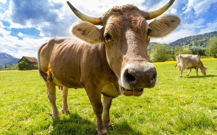 Fleischkonsum – Über seine Ethik und Notwendigkeit