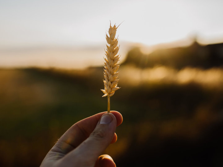Gluten – Ein Problemprotein im Kreuzverhör